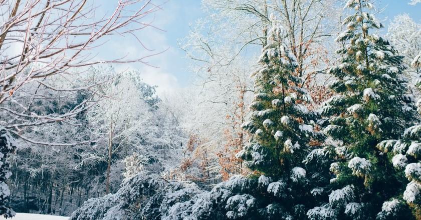 Snow | © Ian Schneider / Unsplash