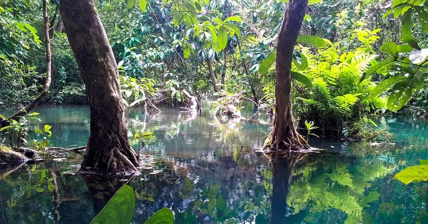 Lao Jungle | © Kolibri5/Pixabay