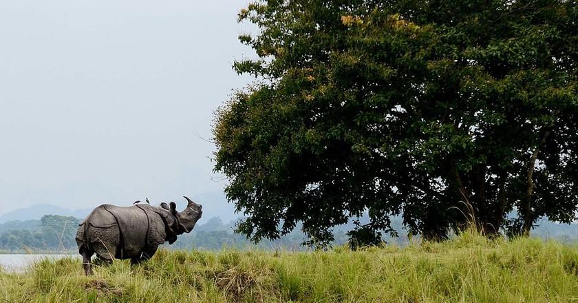 Kaziranga   ©Diganta Talukdar / WikiCommons