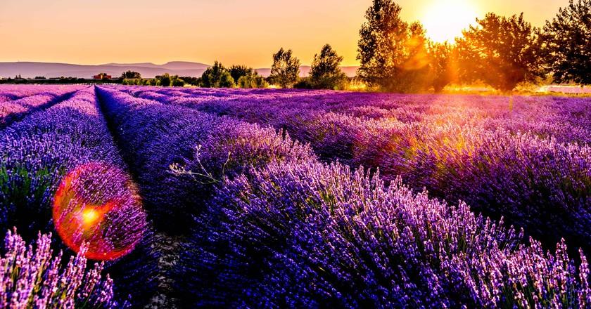 Provence   © Leonard Cotte/Unsplash