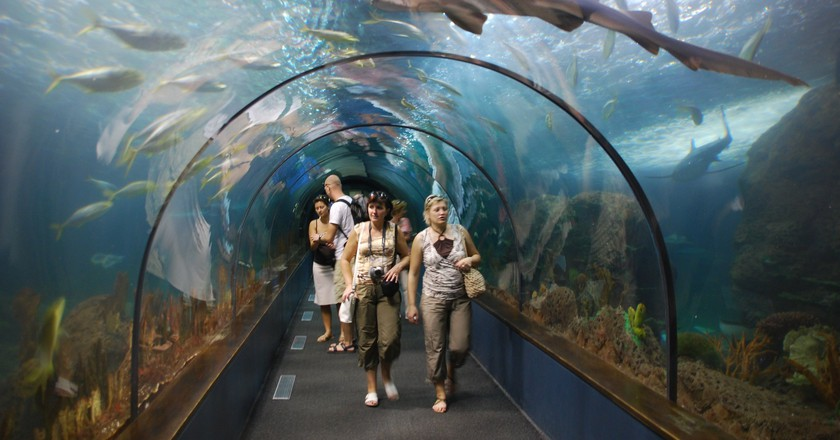 The Shark Tunnel at Loro Park | © Wladyslaw / Wikimedia Commons