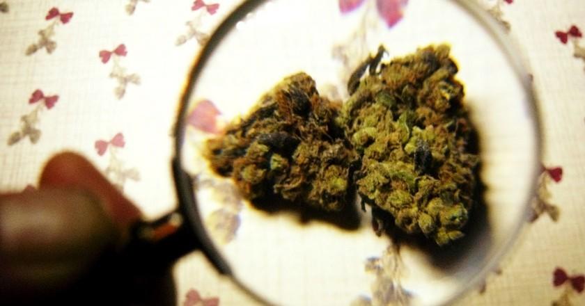 Marijuana|©tanjila ahmed/Flickr