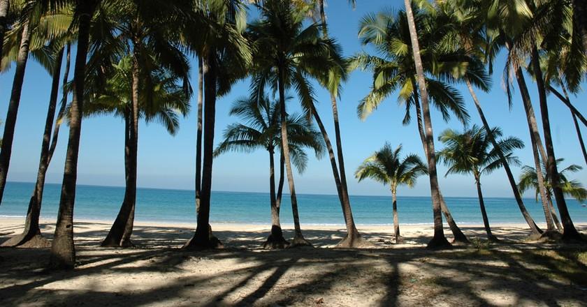 Palm trees line Ngapali Beach, Myanmar | © Tamlyn Rhodes / Free Images