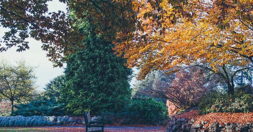 Fall in Queen Elizabeth Park | © Hayley Simpson