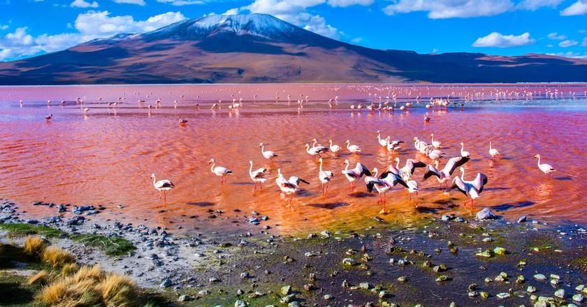 Flamingoes in Laguna Colorada, Uyuni, Bolivia
