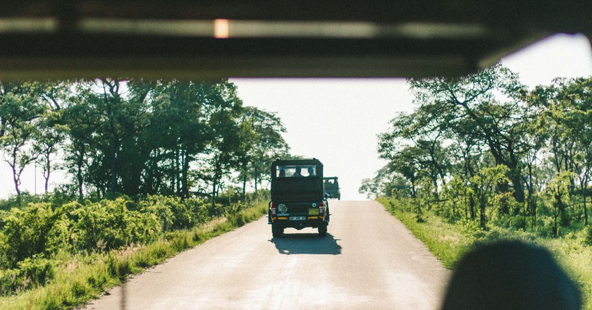 When on a game drive in a national park, don't leave the vehicle to pet animals | ©AnnaKate Auten/Unsplash