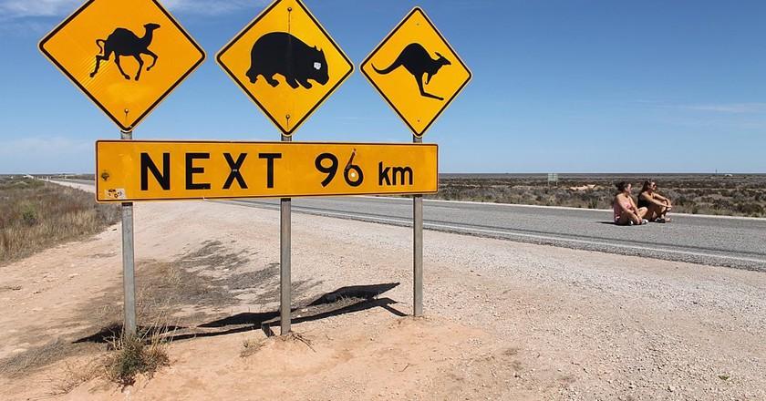 Nullarbor Warning Signs | © Public Domain Photography/WikiCommons