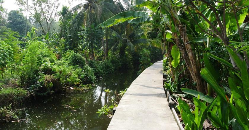 Bang Krachao: Exploring Bangkok's Hidden Jungle Oasis