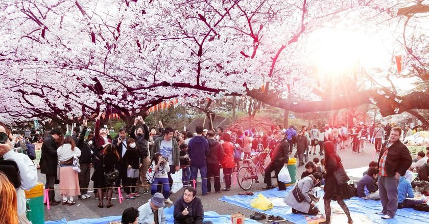 Hanami at Ueno Park 2013   © Dick Thomas Johnson / Flickr