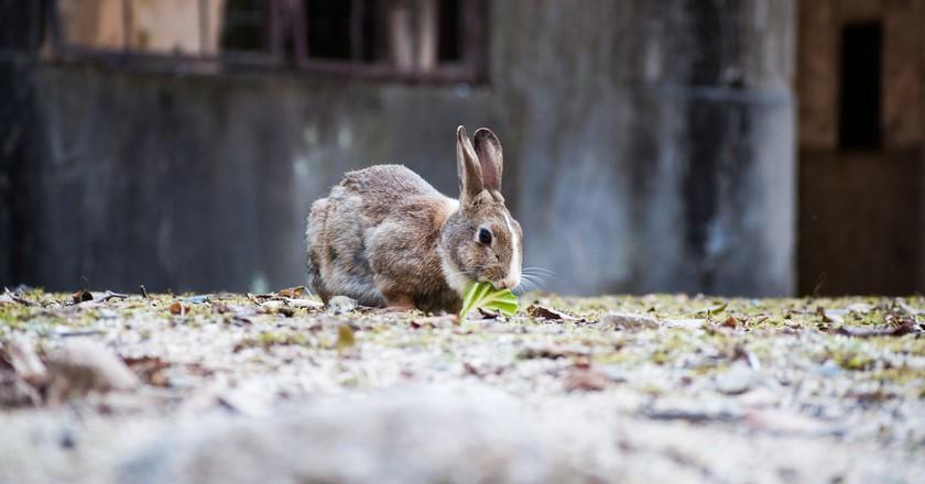 Okunoshima(Rabbit Island)   © c_msmt/ Flickr