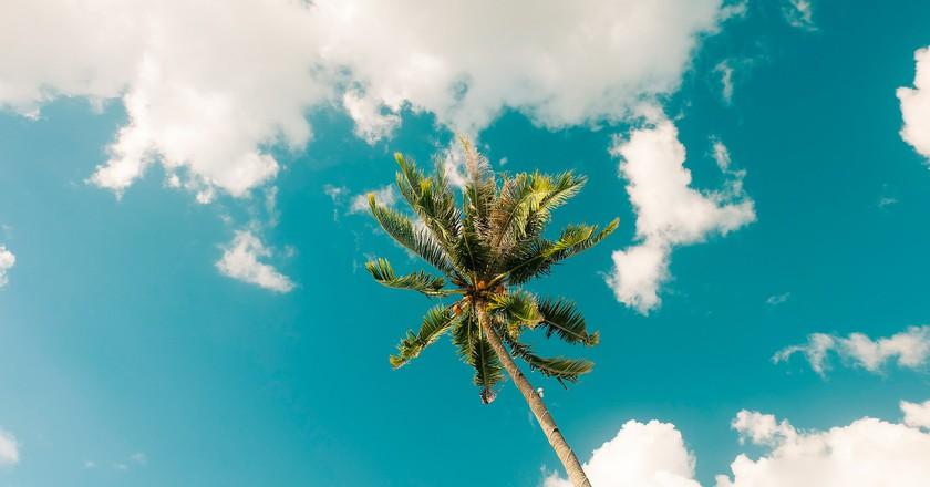 Coconut tree at Lambug Beach, Badian, Cebu