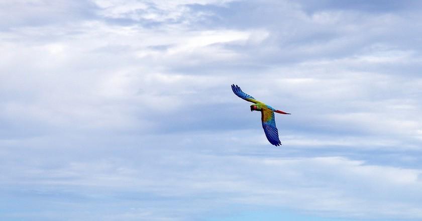 Macaw   © tdlucas5000 / Flickr