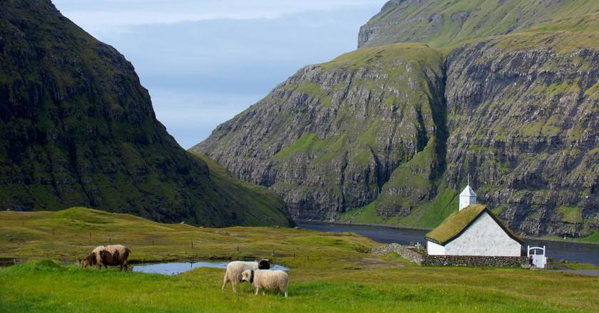 Sheep roaming the Faroe Islands  