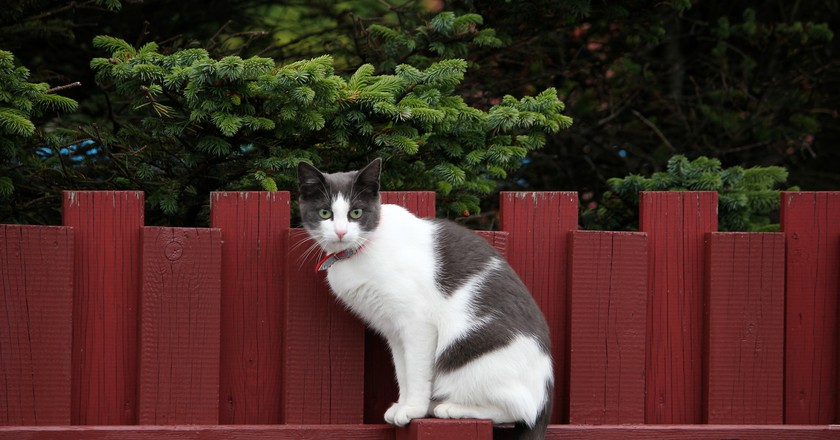 Cat in Iceland | © Marco Bellucci / Flickr