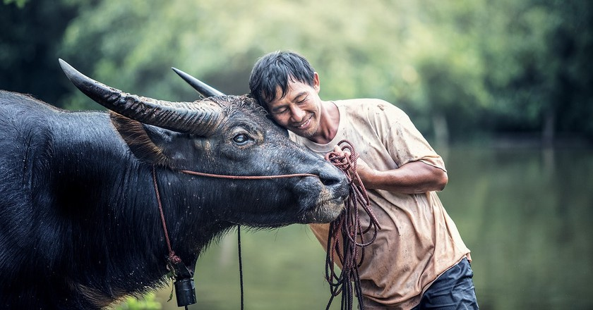 A Man and his Water Buffalo | © Sasint/Pixabay