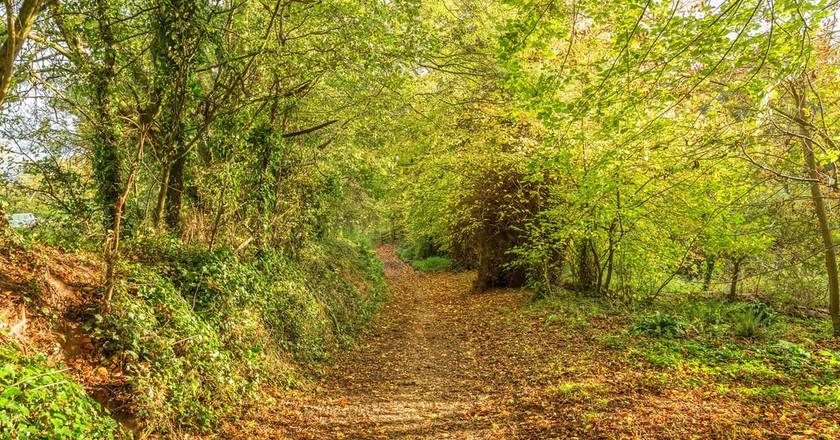 Devon in autumn | © dreamgenienick/Flickr
