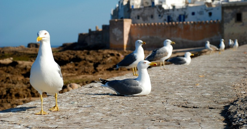 Explore the Charm of Essaouira, Morocco's Trendy Town