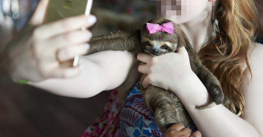 A 'bad selfie' with a sloth | © Nando Machado / World Animal Protection