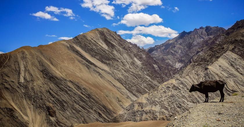 Ladakh | © Simon Matzinger / Flickr