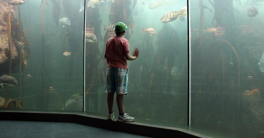 Two Oceans Aquarium   ©Flowcomm / Flickr