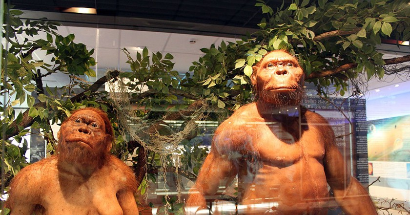Hominid models at the Sterkfontein visitors centre   © flowcomm/Flickr