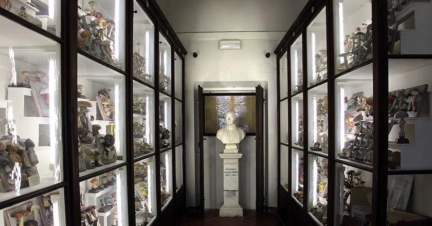 The Old Accademia dei Fisiocritici|©Sailko/WikiCommons