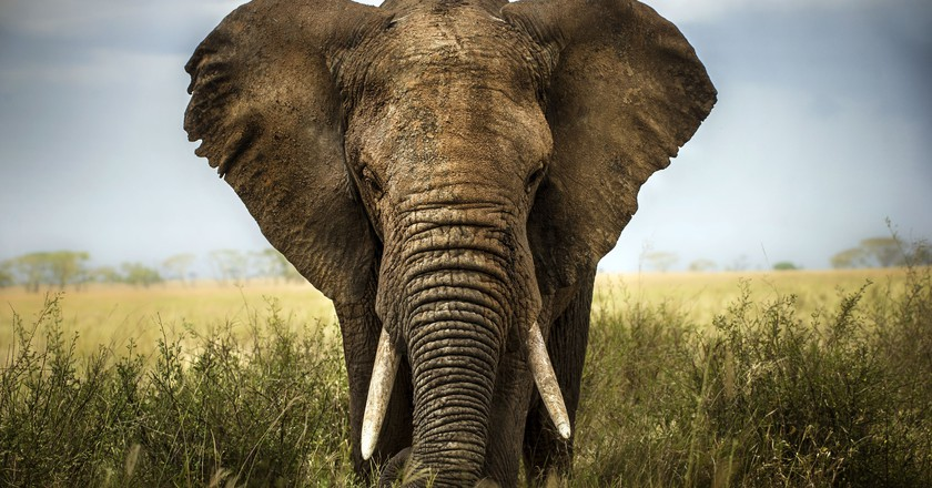 Amarula is contributing to a nonprofit to help save African elephants