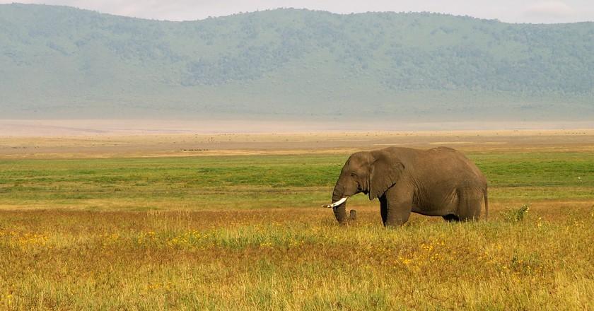 Tanzania   © evaschlomberg/Pixabay