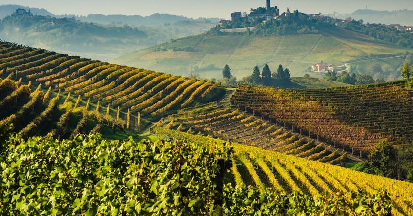 UNESCO protected vineyards in Lange, Piedmont   © Shutterstock/Giorgio1978