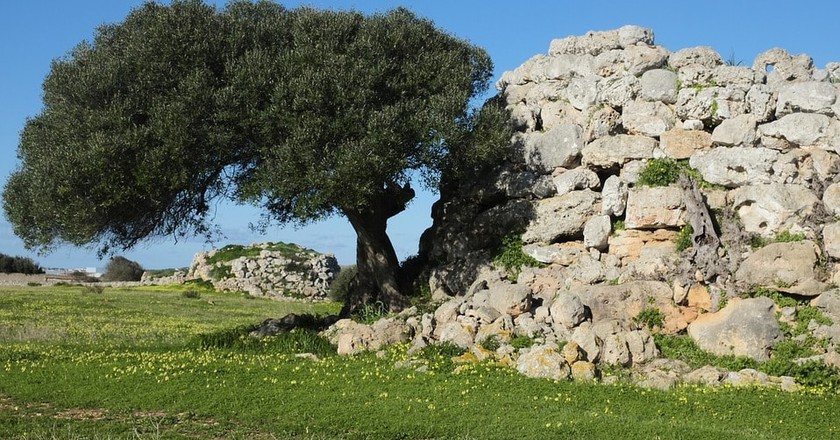 Archeological site and olive tree on Menorca