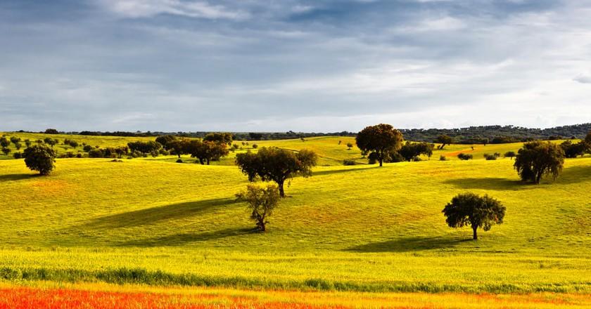 Alentejo during springtime   © Carpeira / Shutterstock