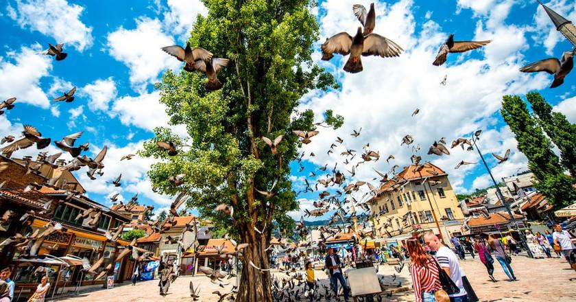 Pigeons in the Old Bazaar, Sarajevo | © RossHelen/Shutterstock