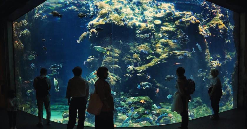 The Steinhart Aquarium   © Jonathan Lin / Flickr