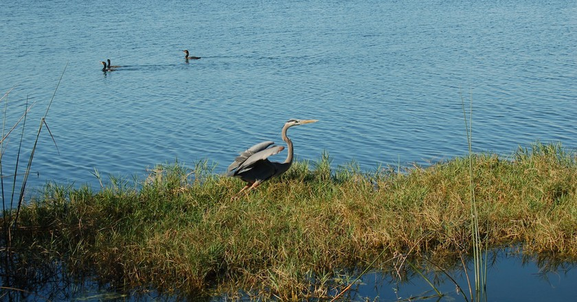 Go fishing in Lake Ivanhoe, Orlando   © Tricia / Flickr