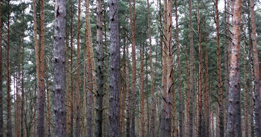 Berlin Forest | © Florian Lehmuth/Flickr