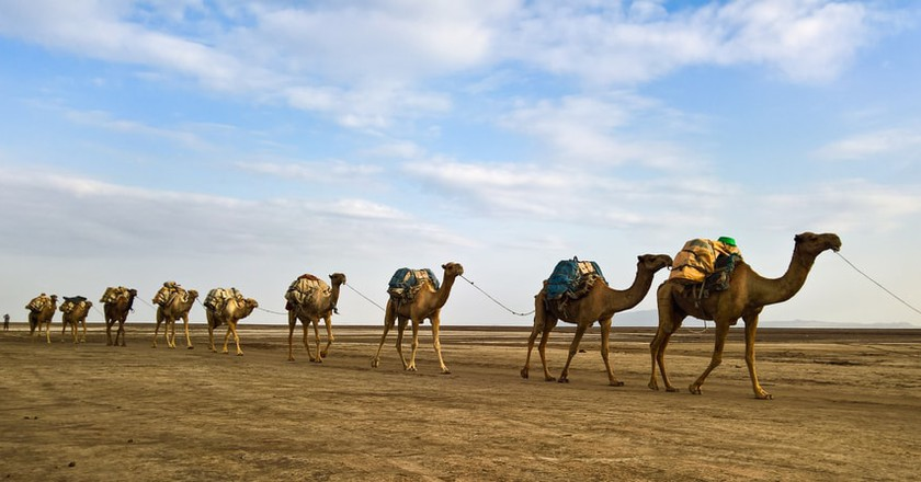 The best way to traverse the desert is by camel | © Homo Cosmicos / Shutterstock