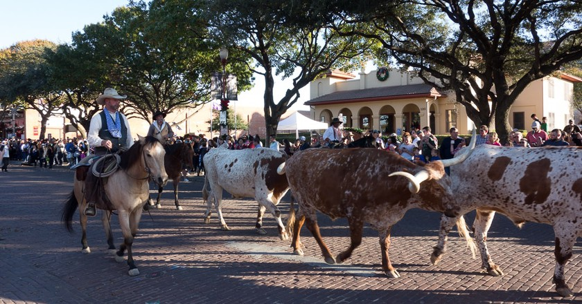A Fort Worth Stock Yards cattle drive | © Christopher Smith / Snap55.com
