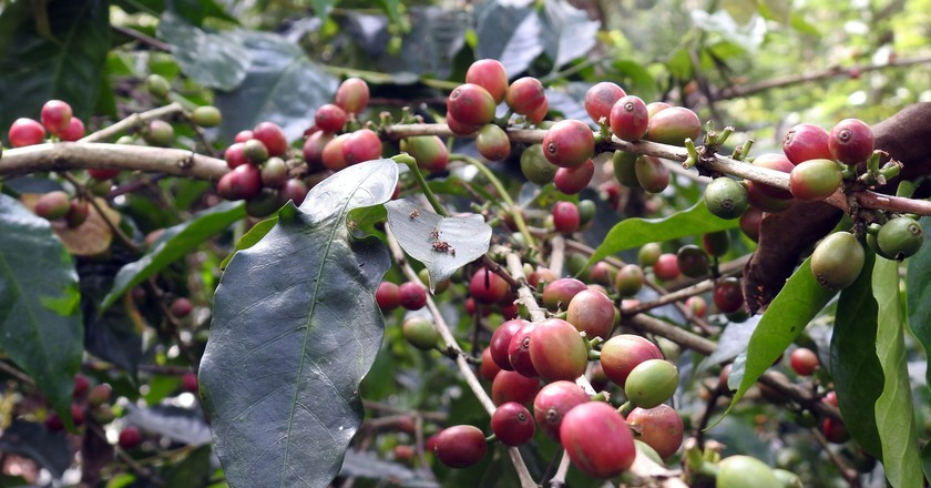 Coffee | © Bindu Gopal Rao