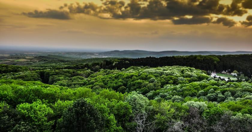 The magnificent greenery of Fruška Gora