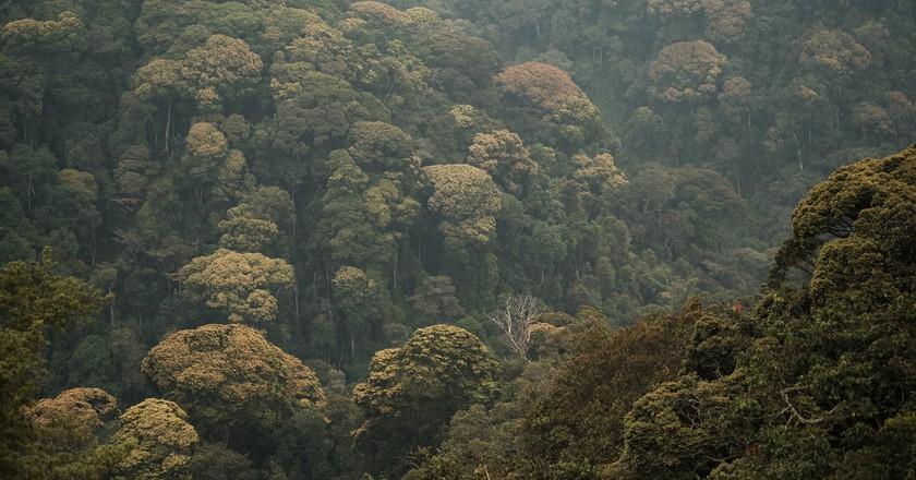Nyungwe's rainforest canopy   © Brian Harries / Flickr
