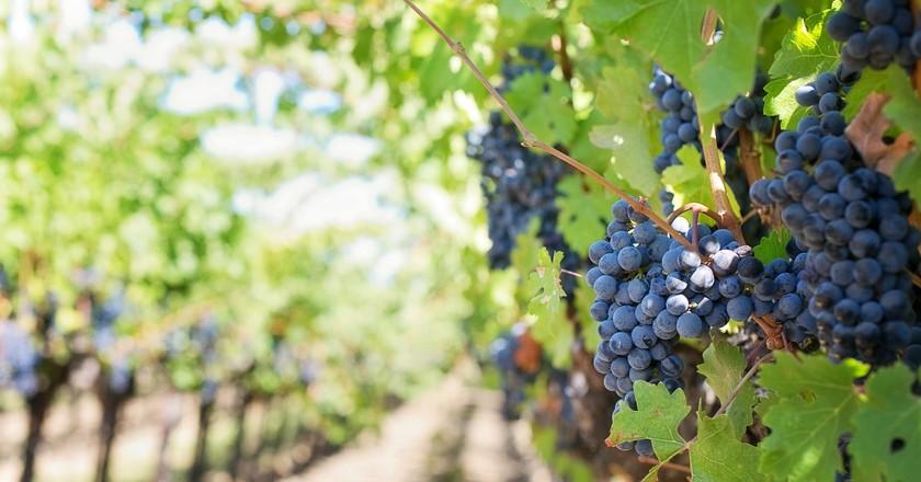 Vineyard   © jill111 / Pixabay