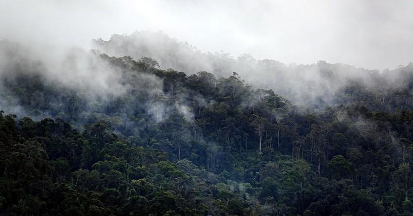 Mist hanging over the Ranomafana National Park rainforest | © Vaughn Lewis/Culture Trip