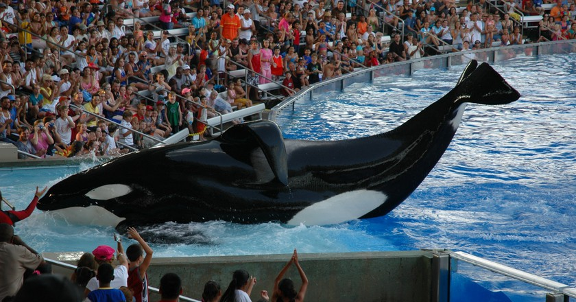 Shamu show at SeaWorld Orlando   ©Jasonshortes / WikiCommons