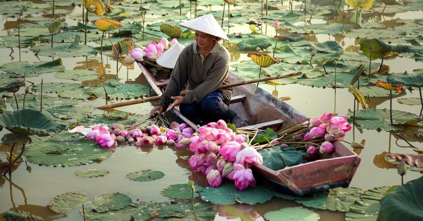 Lotus Pond   ©sutipond/Shutterstock