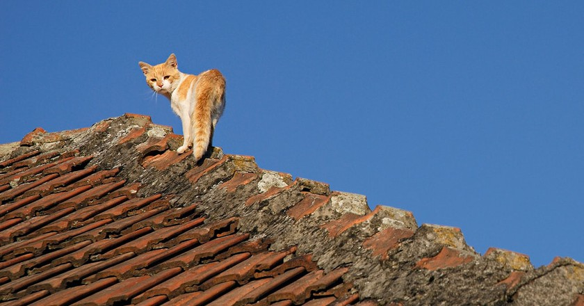 The Curious Reason Why Madrileños Are Called Gatos