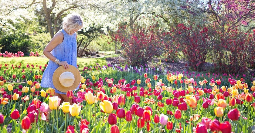 A Woman Wanders Through a Field of Tulips | © jill111 / Pixabay