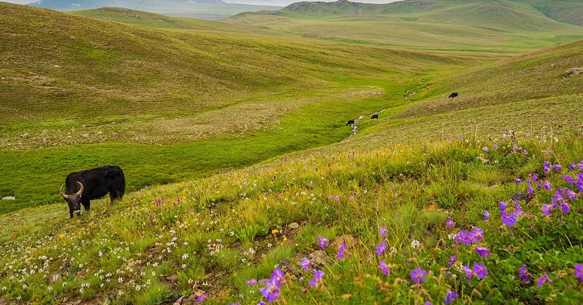 Deosai Plains in summer | © Moiz Ismaili/WikiCommons