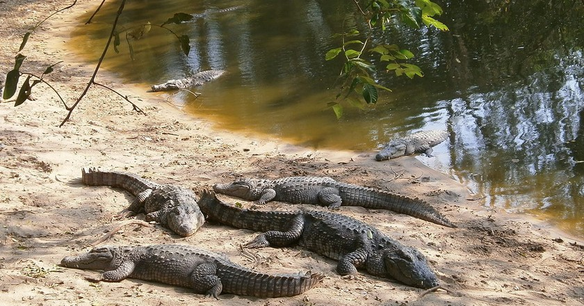 Chennai's Madras Crocodile Bank Trust runs one of the best volunteer programs in the country | © Destination8infinity/WikiCommons
