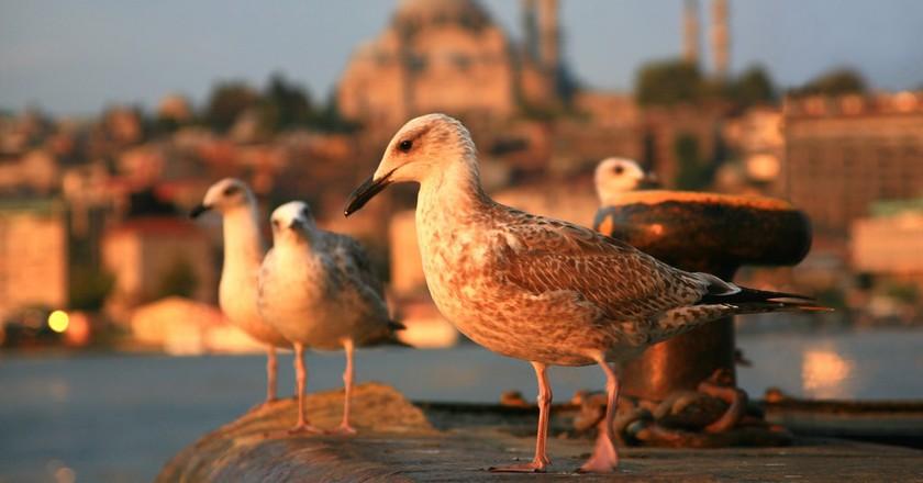 Istanbul seagulls | © LASZLO ILYES/Flickr