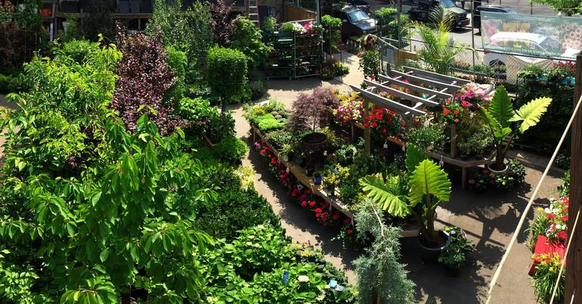 © Chelsea Garden Center
